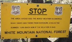 Mountan National Forest