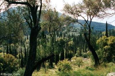 Landschap, Corfu (sluijter)